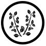 Icone-thyn-cuisson-saumon