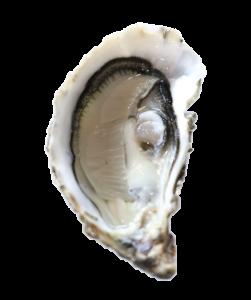 acheter-huîtres