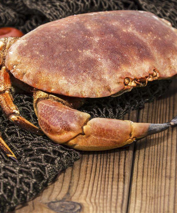 décortiquer-tourteau-crabe